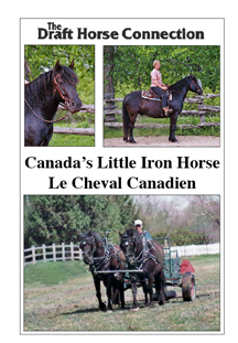 Canada's Little Iron Horse -Le Cheval Canadien
